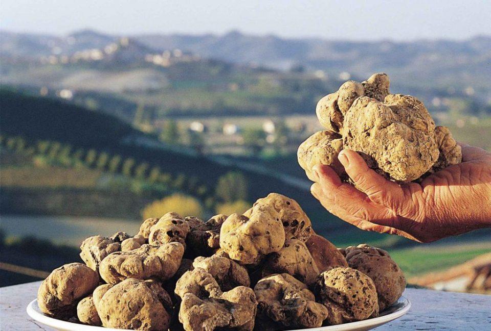 Се продаваат за 1.000 евра од килограм, а се одгледуваат и во Македонија