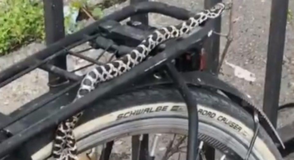Змија на велосипед во Дебар Маало