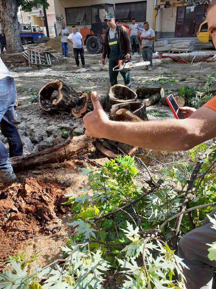 """Богдановиќ: Исечени се 13 дрвја на """"Орце Николов"""""""