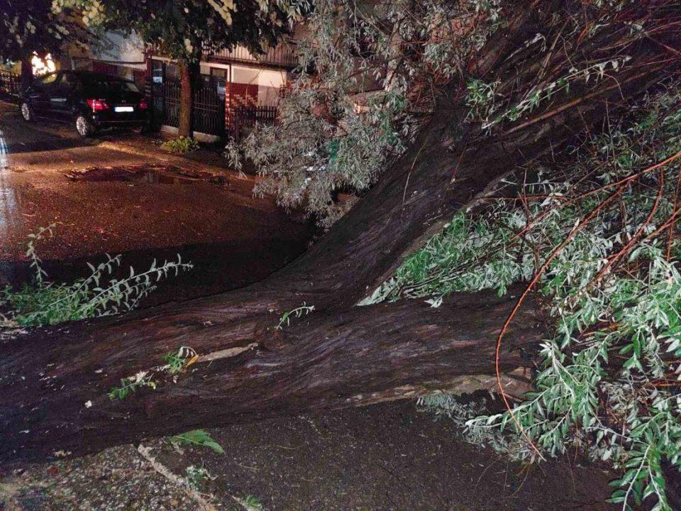 Невреме во Струмичко, откорнати дрвја и урнат електричен столб