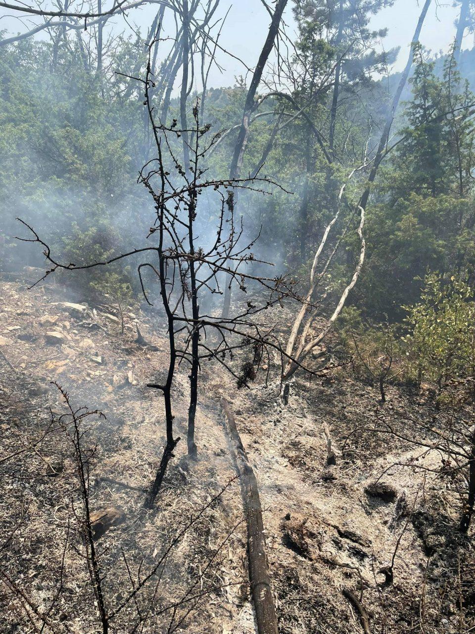 Пожар на Водно – при увидот пронајдени саксии со канабис