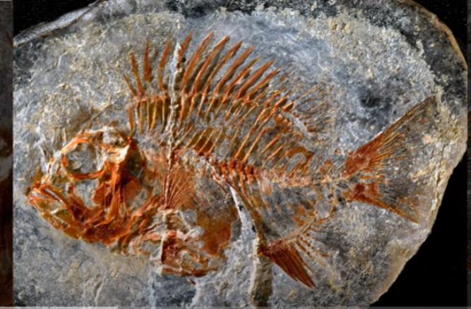 Во Мексико пронајден фосил од непознат вид риба стар 95 милиони години