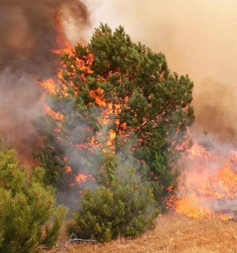 Пожарите во регионот на Пехчево низ фотографии
