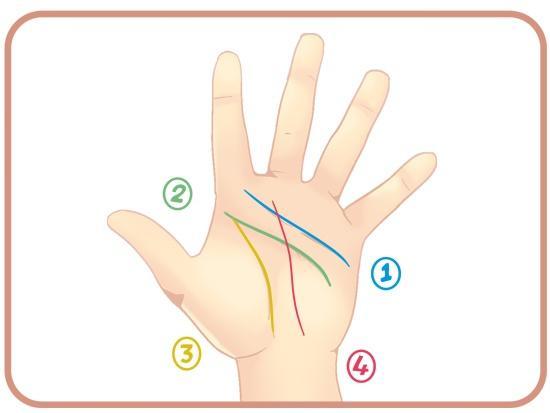 Погледнете што значат линиите на дланката