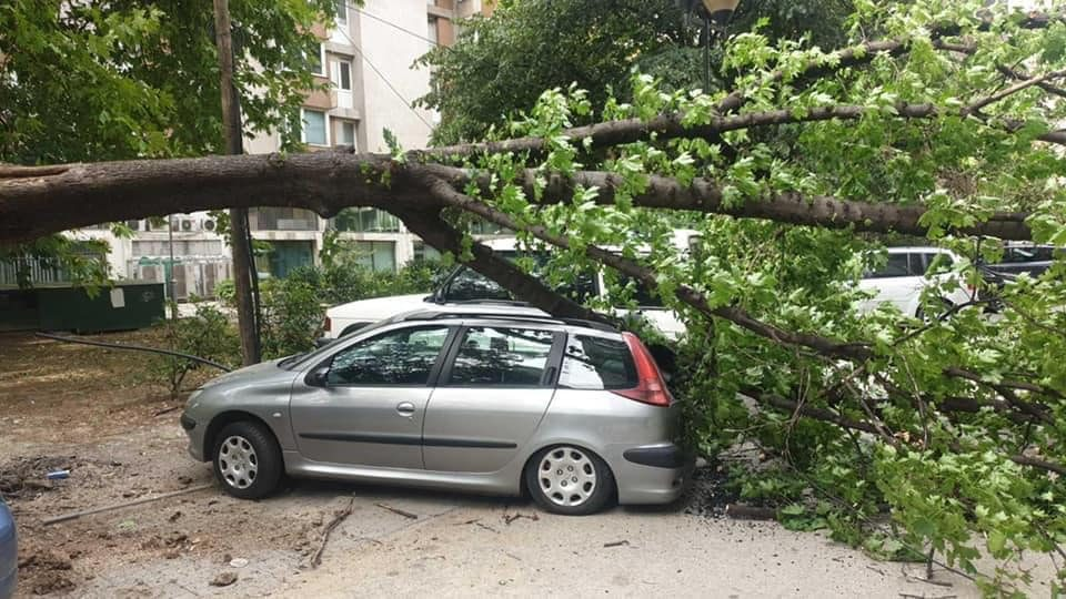 Паднато дрво оштети три паркирани автомобили кај Зелен пазар