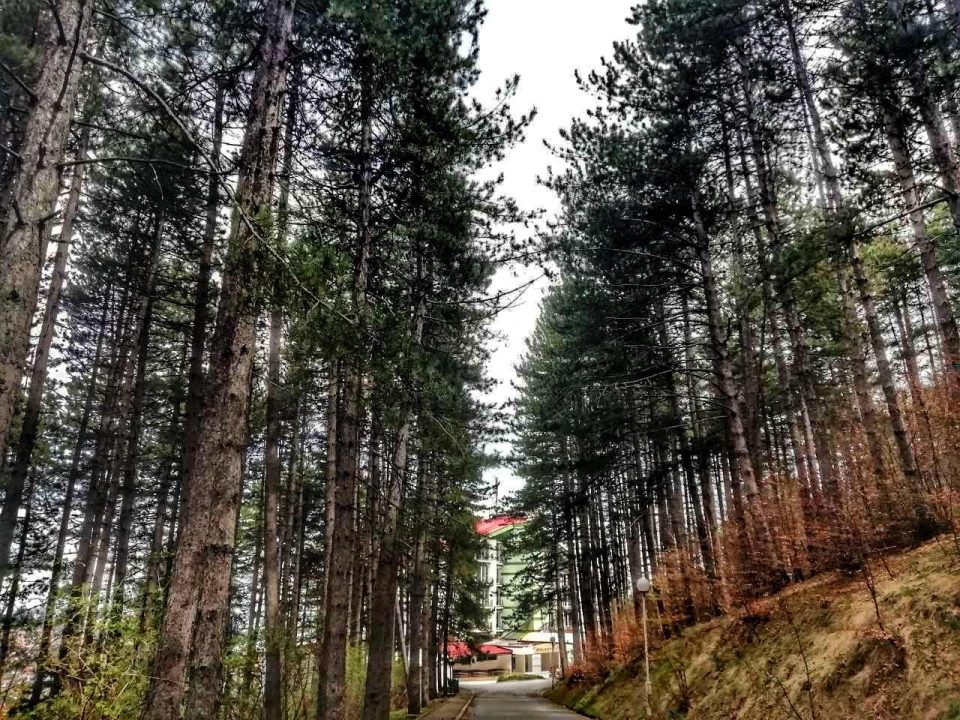 Приведени 4 лица зошто се движеле низ шума во Крушево